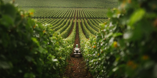An image showing a robot weeding at a vineyard